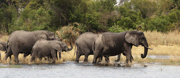 Malawi - elephant translocations